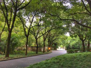Trees in Shanghai